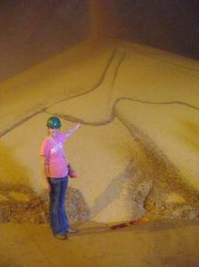 Soybean Exports